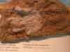 La huella de Dinosaurio de Rillo en el Museo Geominero de Madrid